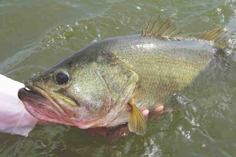 How to Catch Bass on Swimbaits Through the Spring