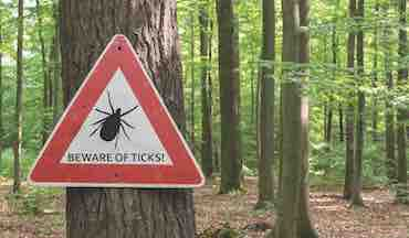 Midwestern turkey hunters and others are hitting the woods. So are a variety of harmful tick species.