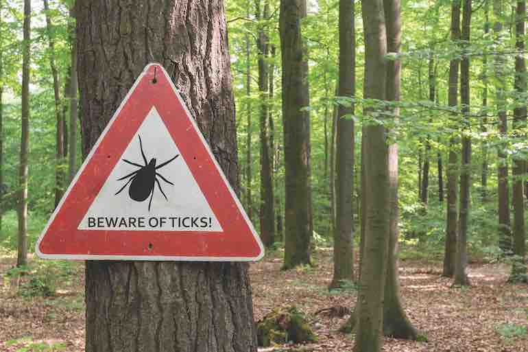 Tick Talk: What You Need to Know Pre-Hunt