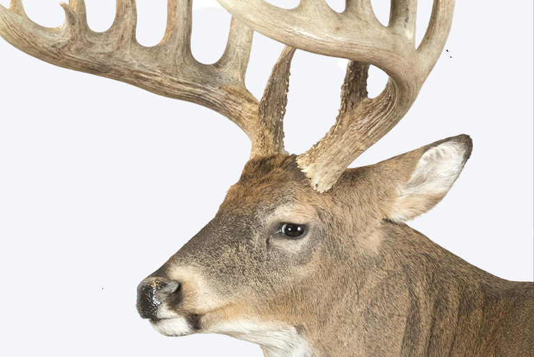 Whitetail Record Books Show Late Season Can Still Be Great