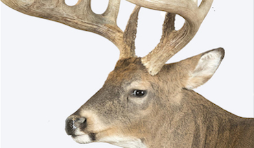Bundle up and punch the clock; end-of-year monster bucks not uncommon.