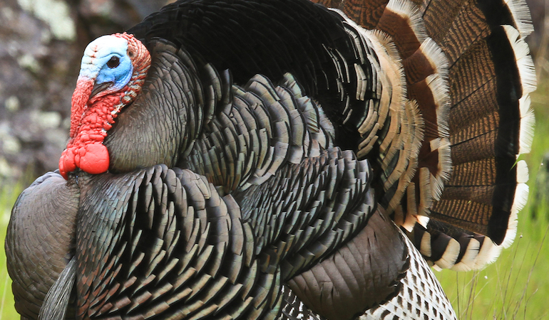 With spring turkey hunting right around the corner, here's some new gear to upgrade your game.