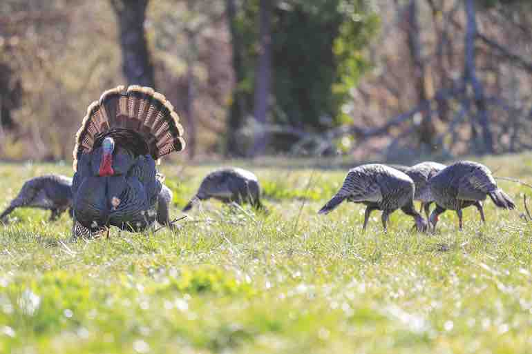 Putting in the work can make all the difference when it comes to filling a turkey tag.