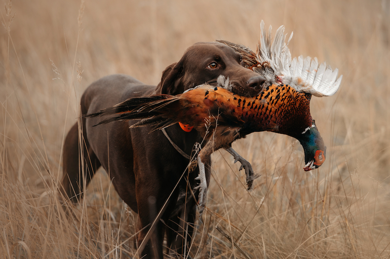 Quick List: Great Gift Ideas for Upland Bird Hunting