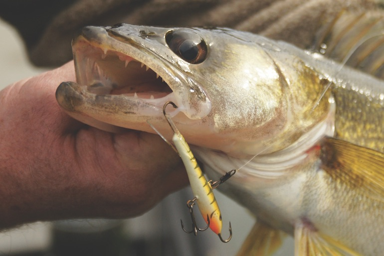 Make it Snappy for Walleyes