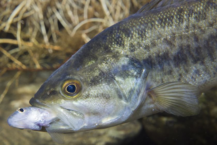 What Do Fish Smell? The Science of Fishing with Scents