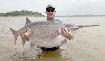 The Sooner State's recent run of huge paddlefish continues with 146.7-pounder caught at Keystone Lake.
