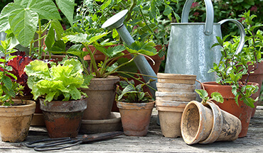 Love the taste of fresh vegetables, fruits and herbs but don't have the room or knowledge to garden? Relax, you don't need a big garden to test out your green thumb abilities; here's how.