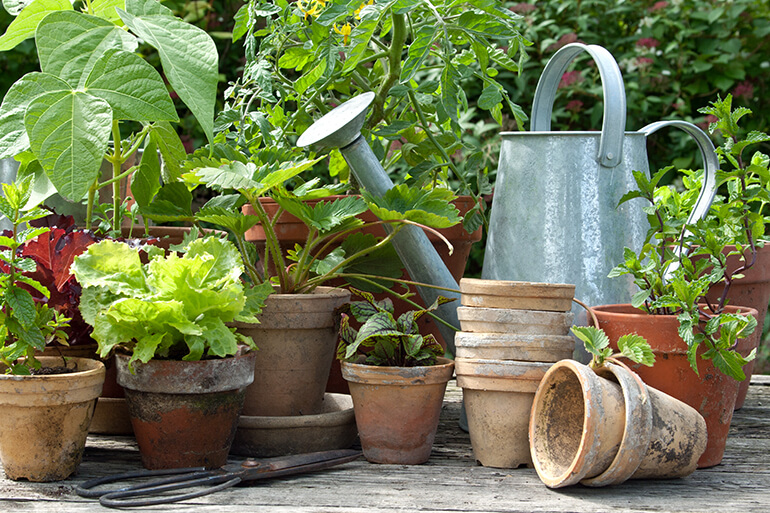 Gardenless Gardening - 5 Plants to Grow on Your Deck