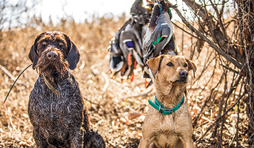 While some see twofold the shenanigans, others see a well-oiled hunting trifecta.