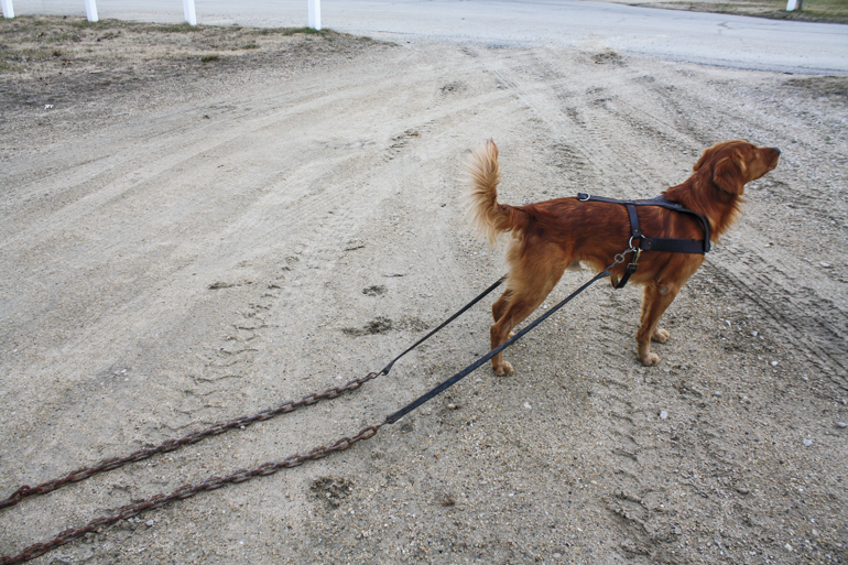 Dog-Roading-Harness-Chains.jpg