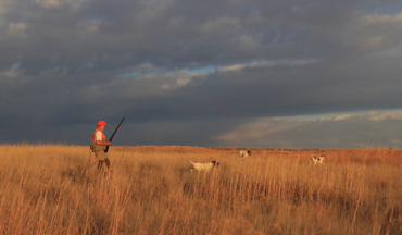 We share some fundamental advice, plus a few first-hunt suggestions for easing in your pup.