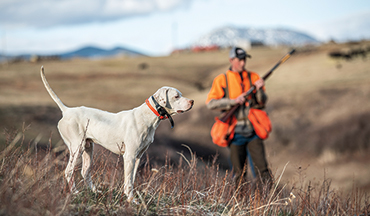 It's certainly possible our four-legged hunting partners sport more mental bandwidth than we think.