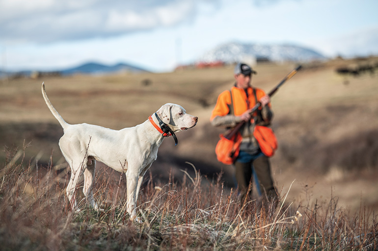 Are Bird Dogs Really Smart?