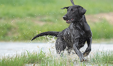 These 8 products are the best of the best for getting your pup into hunting shape.