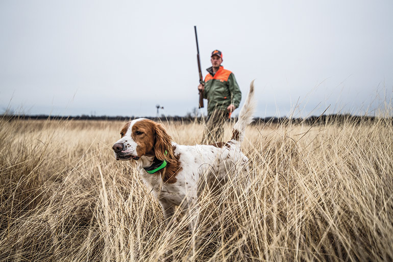 Brittany spaniel and hunter in field