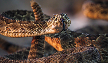 A rattlesnake vaccine offers protection, but more importantly is an extra step to ease your mind.
