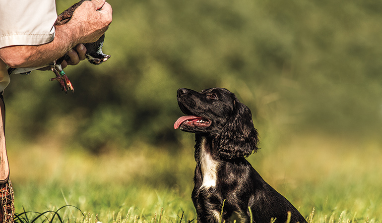 A Balanced Approach to Training Your Flushing Dog