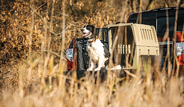 Travel with your hunting dog safely - and in style.