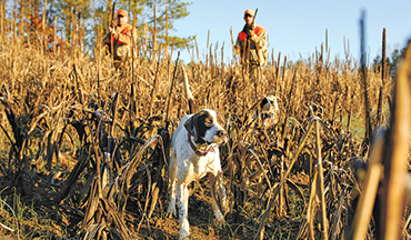Follow these tips to train your dog to hunt effectively and where you want him to be.