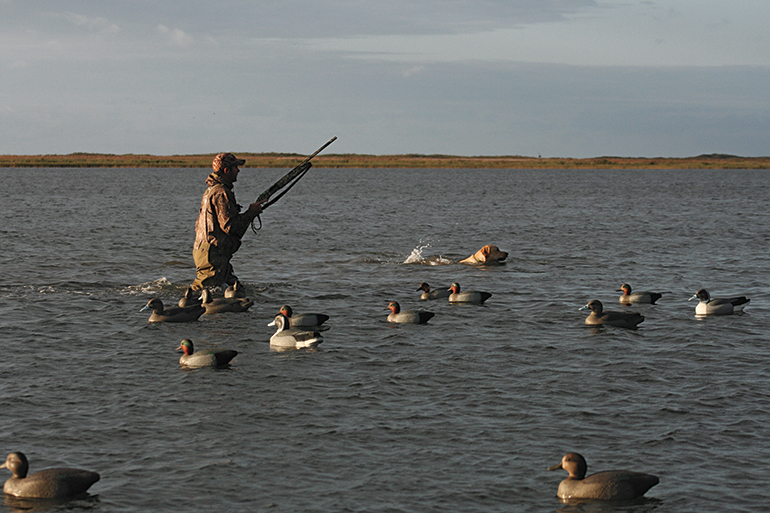 duck hunter in bay with dog