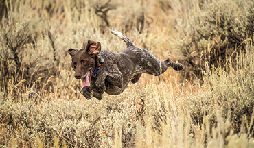 Canine nutrition, supplements, and health-care products designed to keep your gun dog at the top of its game.