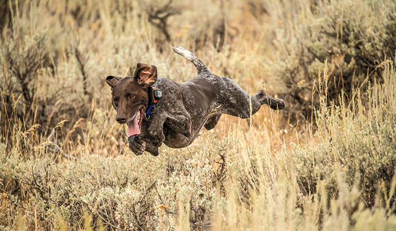 Performance-Boosting Products for Gun Dogs