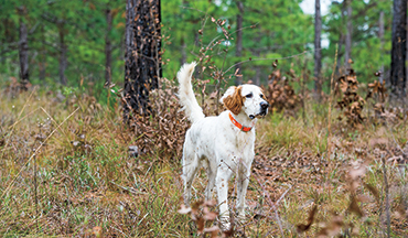 Follow these four methodical steps to to get your gun dog following this important command.