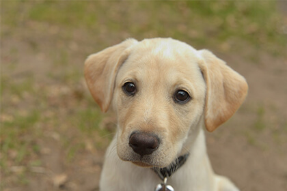 Follow these considerations to avoid common puppy-naming pitfalls.