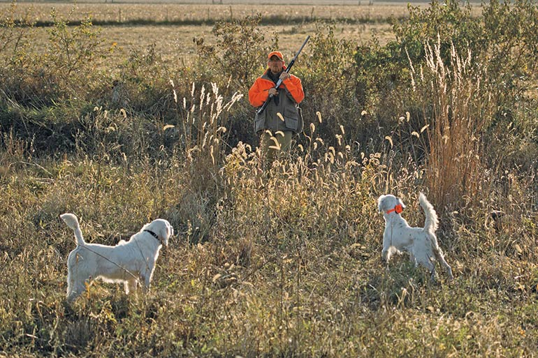 Professional Training for Your Bird Dog