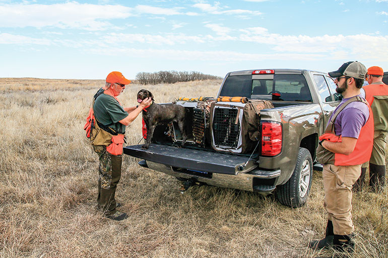 The Post-Hunt Tailgate Checkup for Gun Dogs