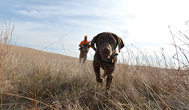 Train yourself to be in sync with your sporting dog, and you'll both benefit!