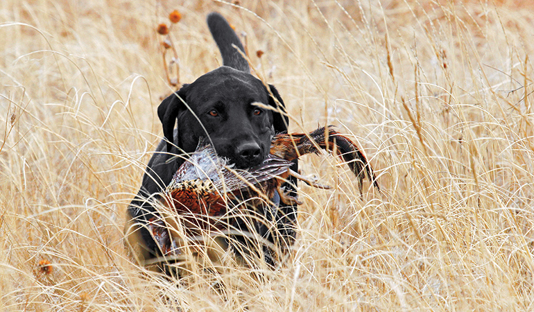 How to Keep Your Upland Dog Safe in the Field