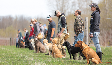 Positive reinforcement training techniques are making waves in the retriever world.