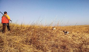 Pheasant hunting requires a little more open lateral swinging pattern than most upland birds.
