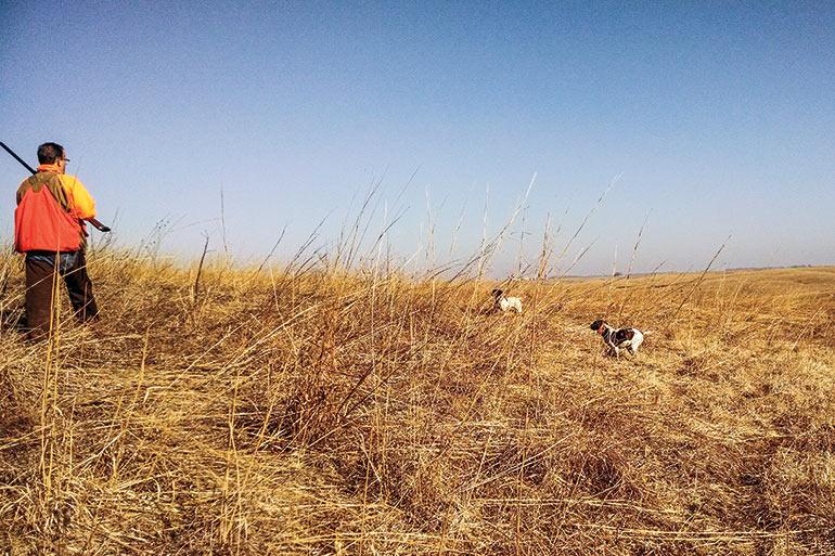 Comment modeler votre chien pour la chasse au faisan