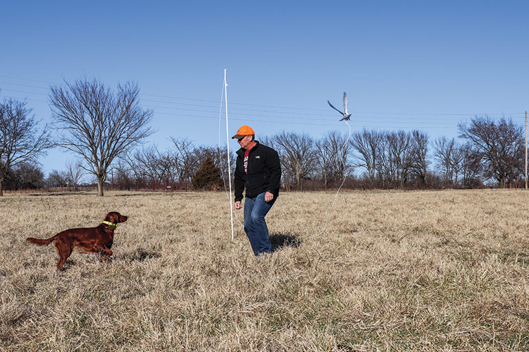 Using Pigeons for Training Bird Dogs