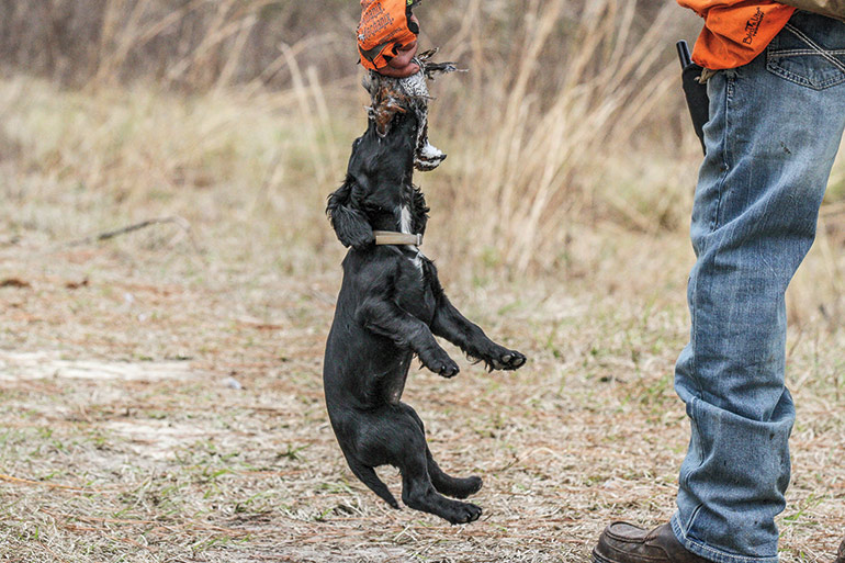 Stop Teaching Your Gun Dog These Bad Habits