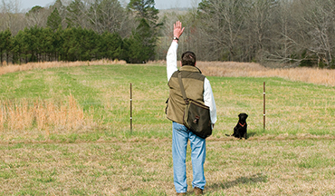 These must-obey commands could be lifesaving for your pup in the field.