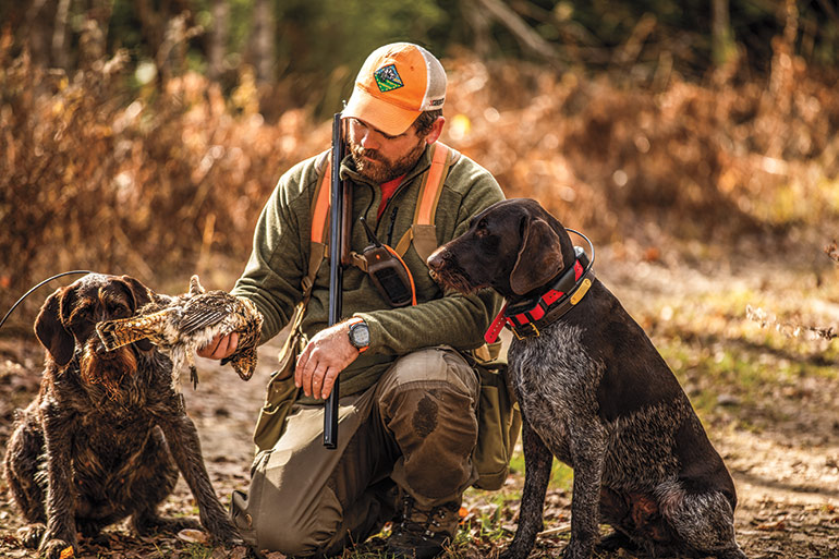 upland hunter with 2 gun dogs