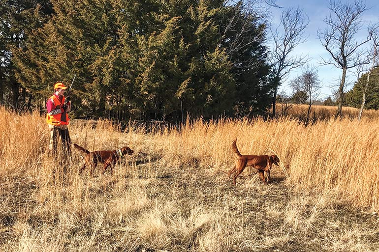 upland hunter in field with 2 Irish setters