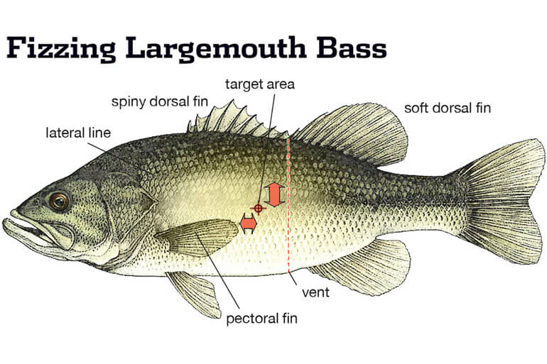 Damage can occur when fish are raised as little as 20 or 25 feet.