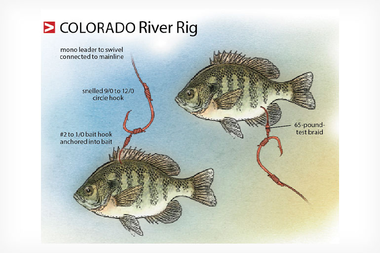 //content.osgnetworks.tv/infisherman/content/photos/Colorado-River-Catfish-Rig.jpg