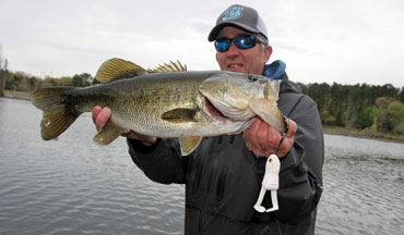 The bass' large mouth is ideal for feeding on preyfish and other aquatic creatures that live throughout the water column.