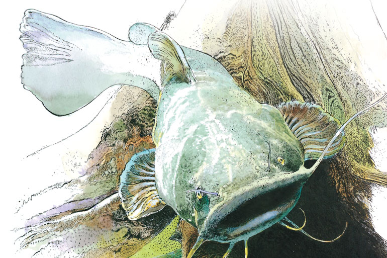 Cutbait Connections to Early-Season Flatheads