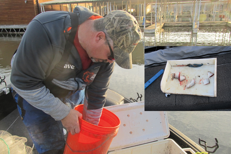 //content.osgnetworks.tv/infisherman/content/photos/Cutting-Shad-for-Blue-Catfish.jpg