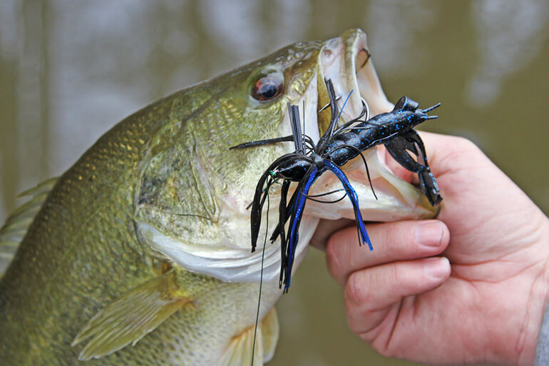 //content.osgnetworks.tv/infisherman/content/photos/Fall-Bass-on-Jigs.jpg