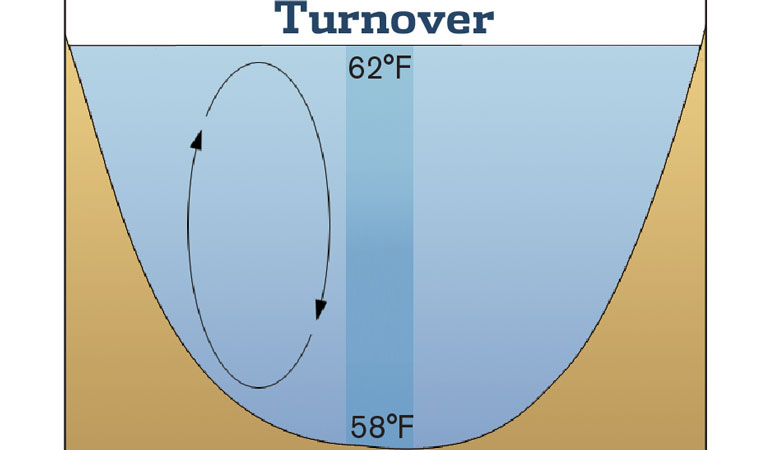 Understanding the Fall Turnover Period