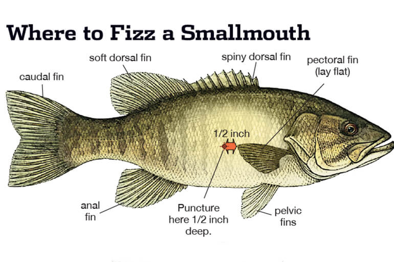 Non-tournament anglers won't kill smallmouths caught deep if they follow a few simple rules.
