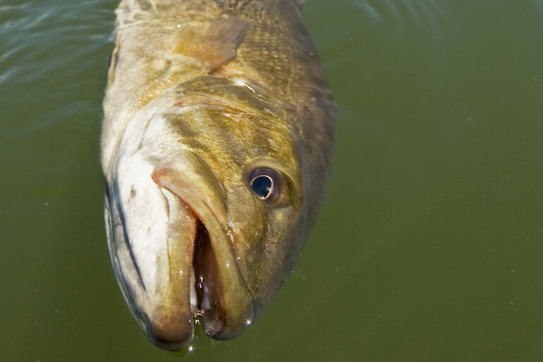 //content.osgnetworks.tv/infisherman/content/photos/Floating-Smallmouth.jpg